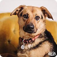Adopt A Pet :: Linx - Portland, OR