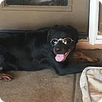 Adopt A Pet :: QuQu - Gilbert, AZ