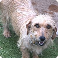 Adopt A Pet :: Mary Ellen - Allentown, PA