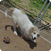 Adopt A Pet :: Mika - Peyton, CO