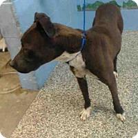 Adopt A Pet :: A505409 - San Bernardino, CA