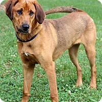 Shepherd (Unknown Type)/Labrador Retriever Mix Dog for adoption in Waldorf, Maryland - Ethan II