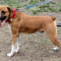 Adopt A Pet :: George - Dalton, GA