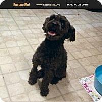 Adopt A Pet :: Kermit - LaBelle, FL