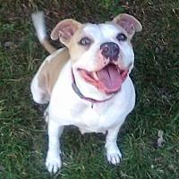 Adopt A Pet :: Lana - Charlotte, NC