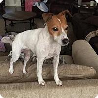 Adopt A Pet :: Winnie/CP - Columbia, TN