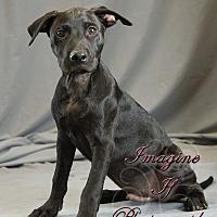 Adopt A Pet :: Duke - Crescent, OK