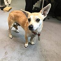 Adopt A Pet :: Miles - Beckley, WV