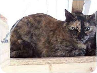 Domestic Shorthair Cat for adoption in Winnsboro, South Carolina - Alice