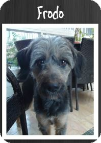 Terrier (Unknown Type, Medium) Mix Dog for adoption in Grand Rapids, Michigan - Frodo