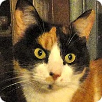Adopt A Pet :: Angel - St. Johnsville, NY