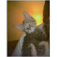 Adopt A Pet :: Chunky Monkey - Owasso, OK