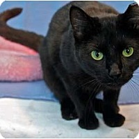 Adopt A Pet :: ISABELLE - McKinney, TX