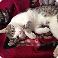 Adopt A Pet :: CCK - Chicago, IL