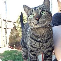 Adopt A Pet :: Raven - Kelso/Longview, WA
