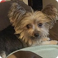 Adopt A Pet :: Maalika - Canton, IL