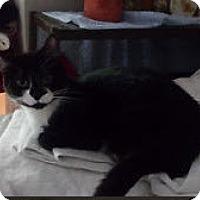 Adopt A Pet :: Jeanie - Edmonton, AB