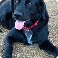 Adopt A Pet :: Tux Boy - Torrance, CA