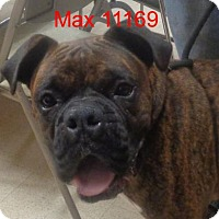Adopt A Pet :: Max - Manassas, VA
