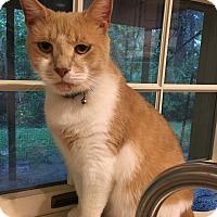 Adopt A Pet :: Thomas - Columbia, MD