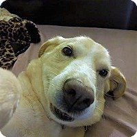 Adopt A Pet :: Toby,too - Schaumburg, IL