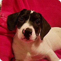 Adopt A Pet :: Trenna (see her videp) - Burlington, VT
