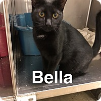 Adopt A Pet :: Bella - Pittstown, NJ