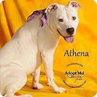 Adopt A Pet :: Athena - Topeka, KS