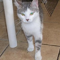 Adopt A Pet :: Misty - Lacon, IL