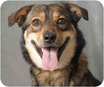 Shepherd (Unknown Type) Mix Dog for adoption in Chicago, Illinois - Dag