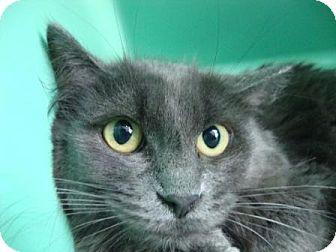 Domestic Mediumhair Cat for adoption in Port Hope, Ontario - Betty Davis