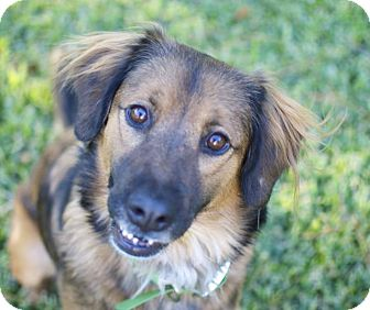 German Shepherd Dog Mix Dog for adoption in Austin, Texas - Sallie