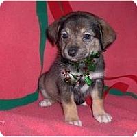 Adopt A Pet :: Trixie - Clayton, OH