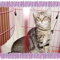 Adopt A Pet :: BAMBI - KANSAS, MO