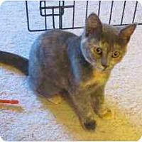 Adopt A Pet :: Princess - Colmar, PA