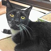 Adopt A Pet :: Tonio - Warminster, PA