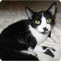 Adopt A Pet :: Obie - Phoenix, AZ