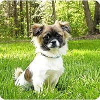Adopt A Pet :: Kimmie - Mocksville, NC