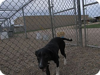 Jack Russell Terrier/Hound (Unknown Type) Mix Dog for adoption in Craig, Colorado - Socks