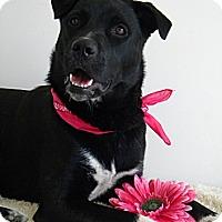 Adopt A Pet :: Apple - Monteregie, QC