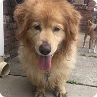 Adopt A Pet :: Rocky II - Rockaway, NJ