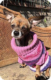 Chihuahua Mix Dog for adoption in Santa Ana, California - Emi