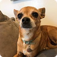 Adopt A Pet :: Eva - Los Angeles, CA