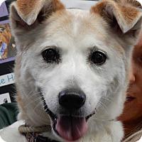 Adopt A Pet :: Milo - Long Beach, NY