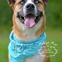 Adopt A Pet :: Ghost - Fort Valley, GA