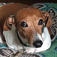 Adopt A Pet :: Captain Jack - Decatur, GA