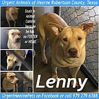 Adopt A Pet :: Lenny - Hearne, TX