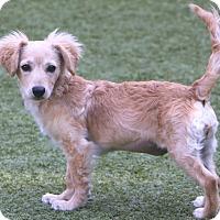 Adopt A Pet :: Luna - Woonsocket, RI