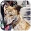 Photo 1 - German Shepherd Dog/American Pit Bull Terrier Mix Dog for adoption in Berkeley, California - Harriet