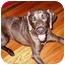 Photo 4 - Weimaraner Dog for adoption in Marietta, Georgia - Carter-Adopted